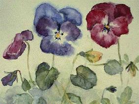 Viola_Tricolore_von_Jutta_Marie_Zimmermann